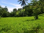this land on the width 3769 M2. about 100 m from the beach.. any villa already in around ( Villa ombak, Calwex villa, dive Indonesia villa). good for villa or hotel.. Freehold already. Close to Gili.